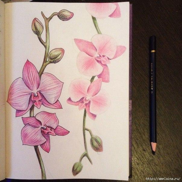 Как нарисовать орхидею6 (604x604, 193Kb)