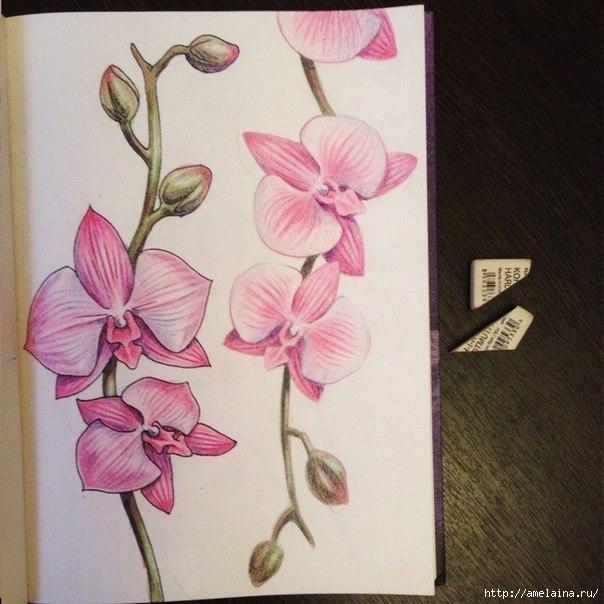 Как нарисовать орхидею9 (604x604, 191Kb)