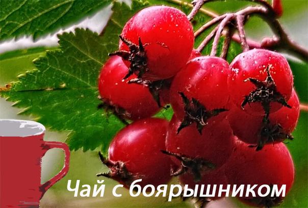 4897960_chaysboyaryishnikom (604x408, 246Kb)