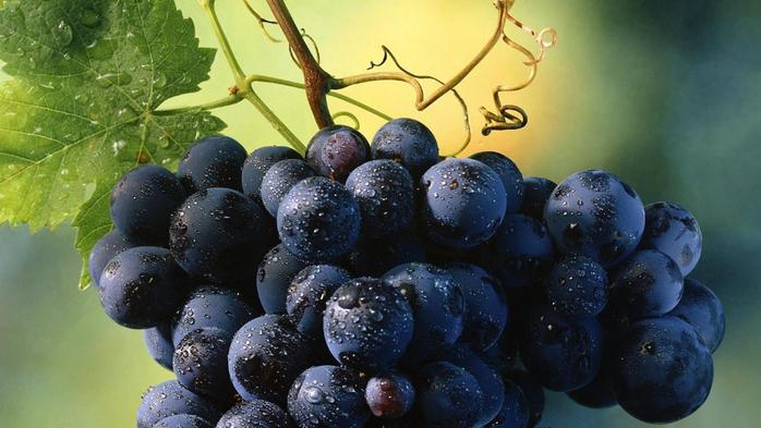 виноград фото (700x393, 310Kb)