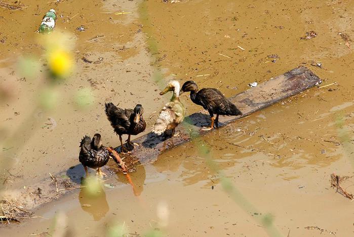 Фотографии зверей, которые сбежали из зоопарка Тбилиси