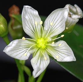 цветок (275x270, 60Kb)