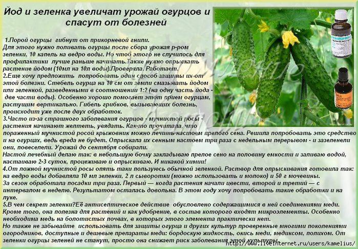 как удобрение из кефира для растений каких