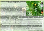 Чем брызгать рассаду помидор от болезней 7