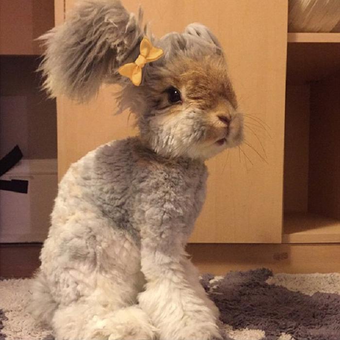 смешной кролик валли 2 (700x700, 370Kb)
