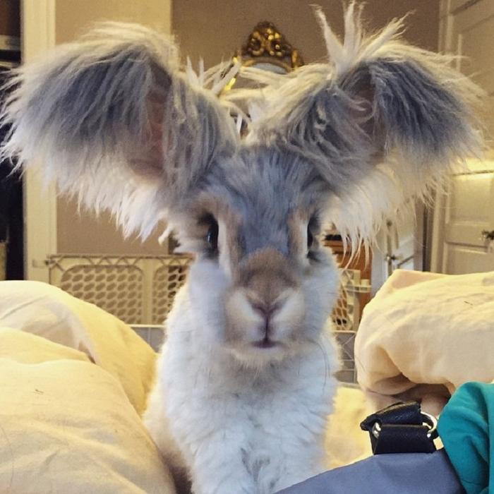 смешной кролик валли 4 (700x700, 412Kb)