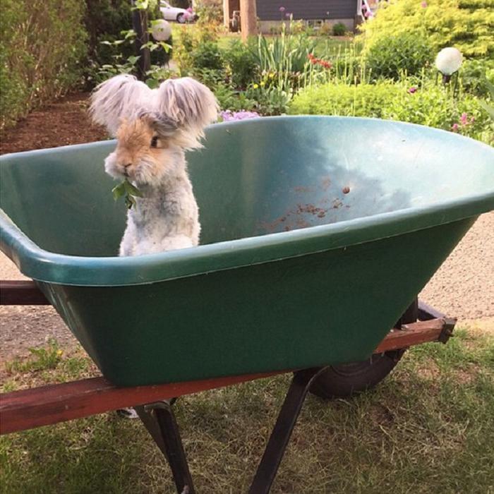 смешной кролик валли 6 (700x700, 473Kb)