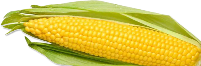corn_PNG5285 (700x231, 231Kb)