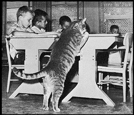 Кот по имени Класс Восемь  look (472x404, 163Kb)