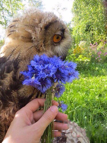Цветы для совы (452x604, 322Kb)