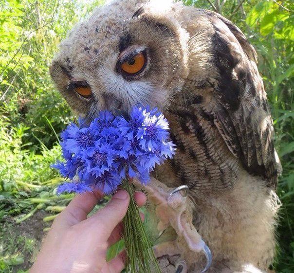 Цветы для совы2 (604x561, 385Kb)