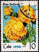 Куба Роза желтая 2 (133x175, 27Kb)