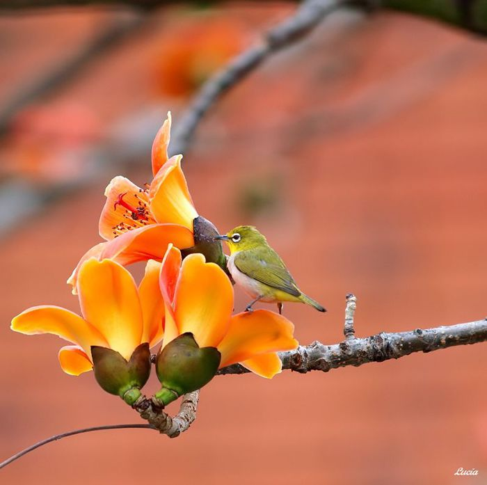 3517075_beautifulbirdsandflowers1 (700x697, 44Kb)