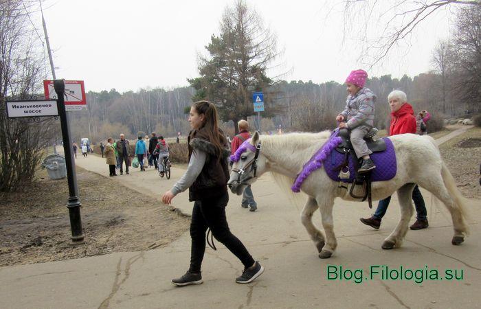 Маленькая девочка верхом на лошади: катание детей в Покровском-Стрешневе  (700x450, 57Kb)