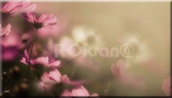 Просто цветочки (350x200, 55Kb)