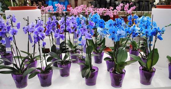 орхидея2 (600x314, 304Kb)