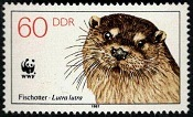 YtDD 2735 Eurasian Otter (Lutra lutra) (175x106, 13Kb)
