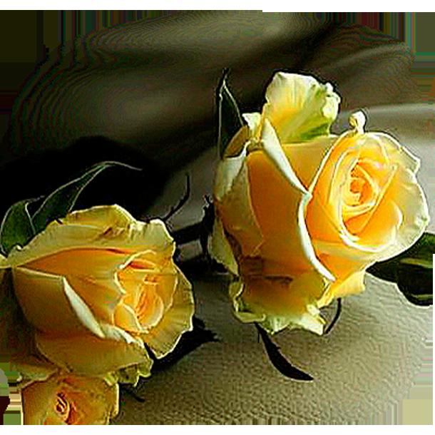 115663998_5053532_rozi_jelt_1_ (610x610, 667Kb)