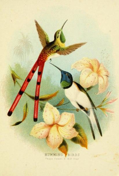 птицы/3881693_NrEPHEaRcu4 (411x604, 48Kb)