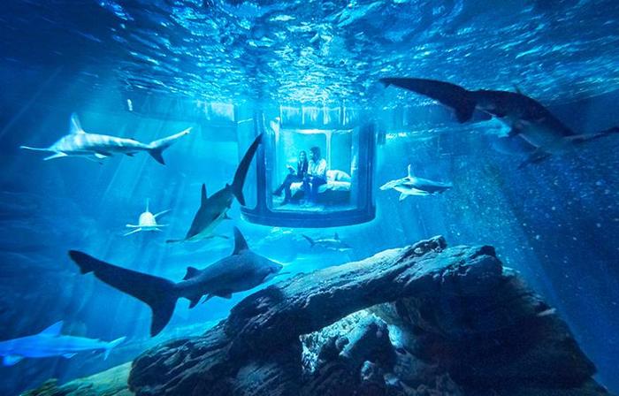 подводная спальня с акулами 3 (700x448, 406Kb)
