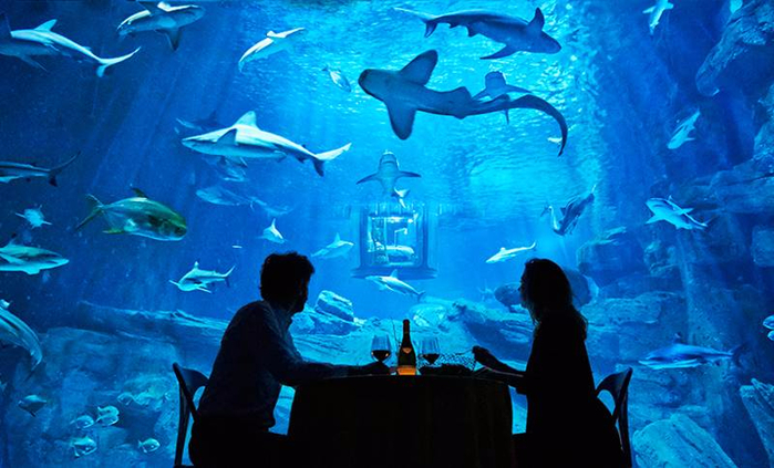 подводная спальня с акулами 5 (700x423, 370Kb)