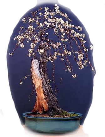 3821971_bonsai1_1_ (335x438, 251Kb)