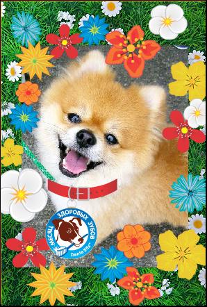 dog (298x442, 150Kb)