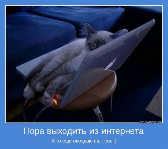 слезятся глаза у кота/4030949____ (570x507, 47Kb)