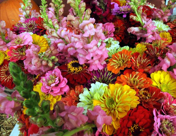 http://img0.liveinternet.ru/images/attach/c/4/78/303/78303770_flowers.jpg