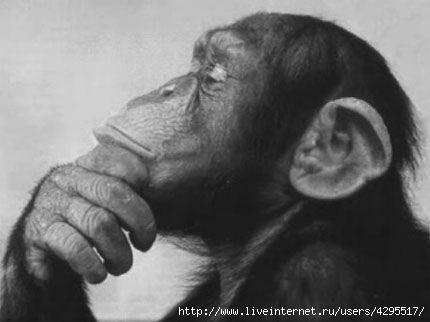 интересное о животных/4295517_1316447174_5 (430x322, 49Kb)