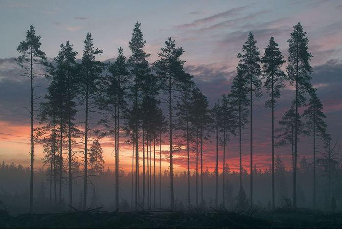 nature (5) (700x469, 53Kb)