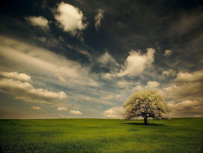 nature (86) (700x526, 68Kb)