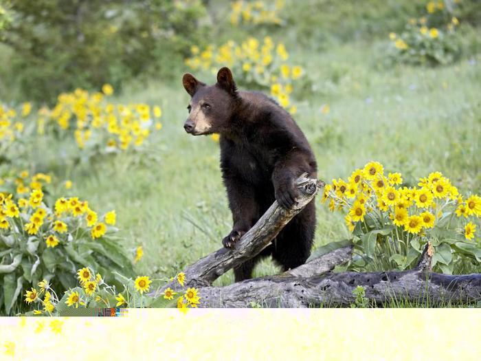 Медведь с цветами картинки 2