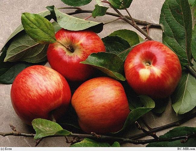 яблоки крвсные (650x500, 151Kb)