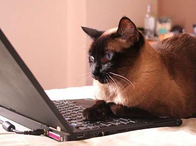 cat копия (400x298, 62Kb)