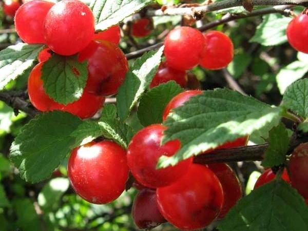 фруктово-ягодное настроение 23127