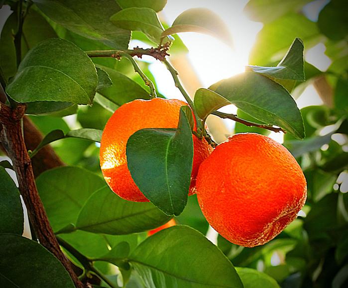 фруктово-ягодное настроение 63441