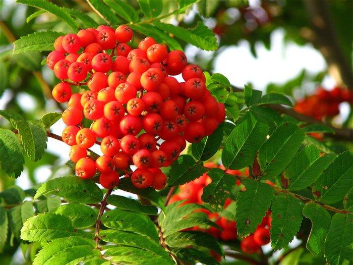 фруктово-ягодное настроение 46004
