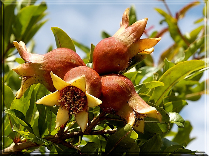 фруктово-ягодное настроение 14957