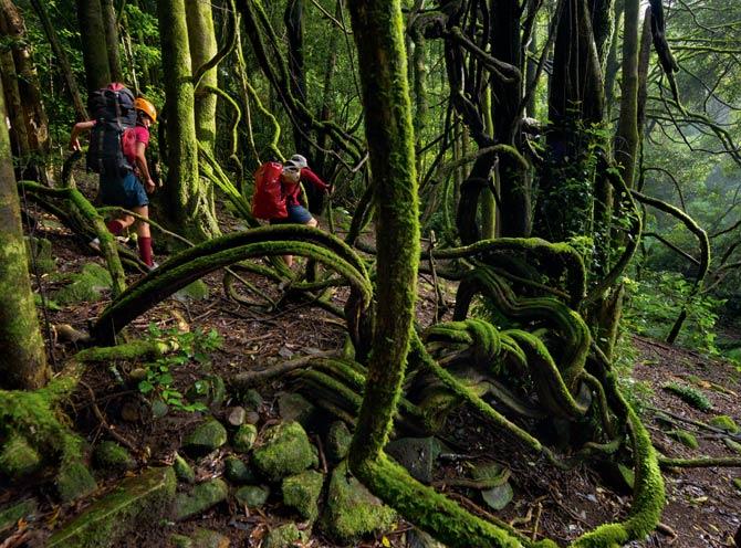 лес (670x496, 106Kb)