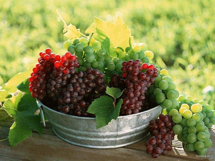фруктово-ягодное настроение 11571