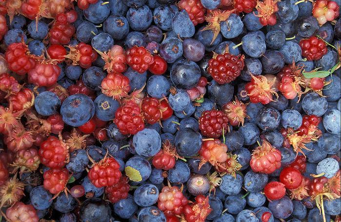 фруктово-ягодное настроение 13238
