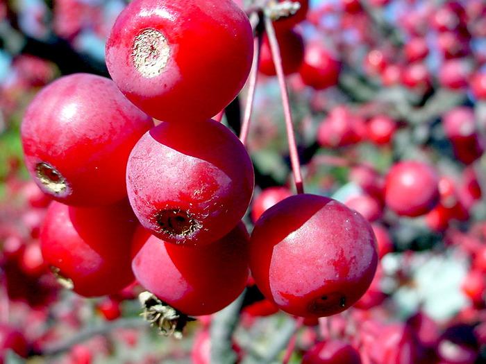 фруктово-ягодное настроение 36877