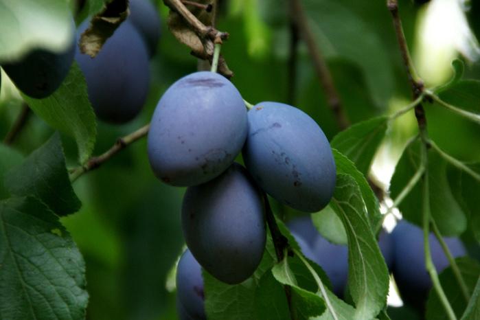фруктово-ягодное настроение 57266
