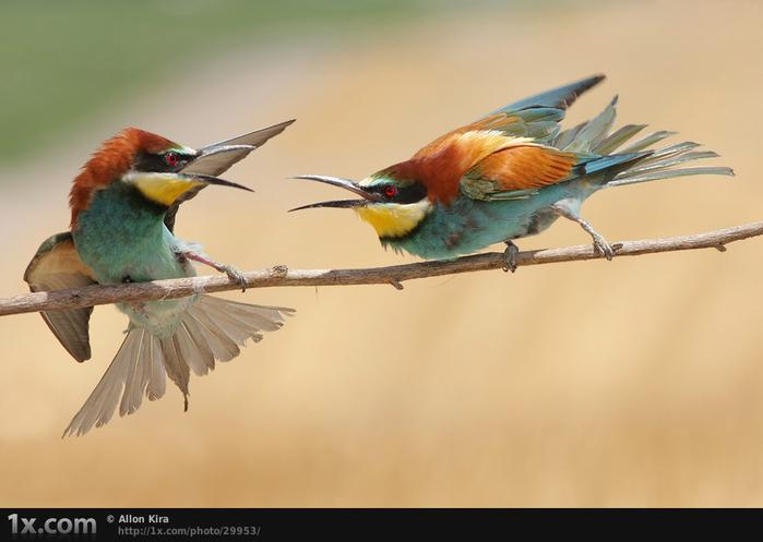 Потом расширились...  Красивые фото живой природы.  Прочитать целикомВ.