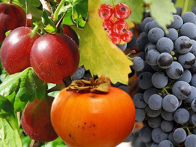 фруктово-ягодное настроение 85869