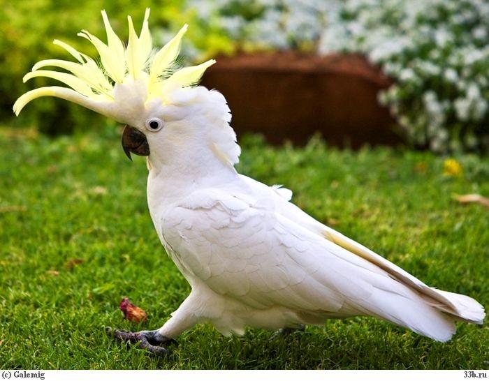 попугай (700x546, 214Kb)