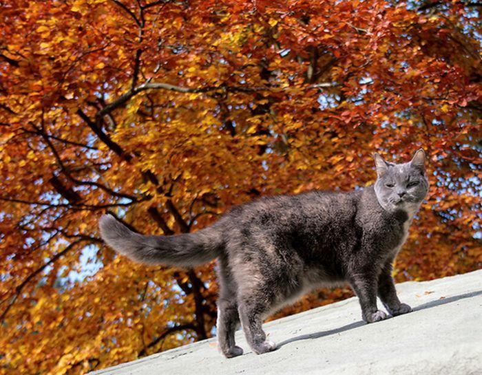 коты и осень (1) (700x545, 105Kb)