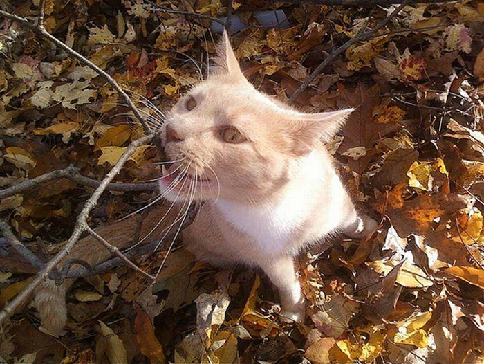 коты и осень (4) (700x526, 101Kb)