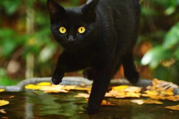 коты и осень (6) (700x465, 41Kb)